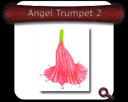 Buy Angel Trumpet 2 Note Card