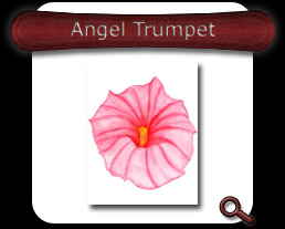 Buy Angel Trumpet Note Card