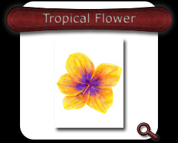 Buy Tropical Flower Note Card